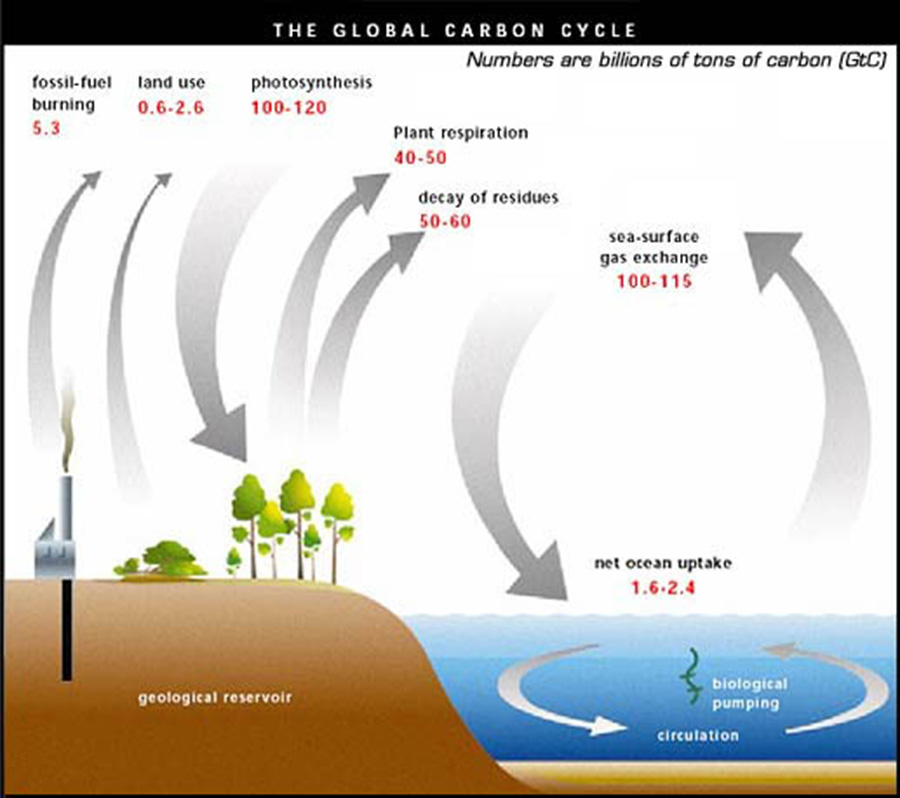 an analysis of the sources of carbon dioxide in the earths atmosphere Carbon dioxide is considered a greenhouse gas that affects the earth's atmosphere by causing global warming this occurs through the emission of too much carbon dioxide into the atmosphere, which is caused mainly by the burning of fossil fuels the greenhouse effect occurs when sunlight goes through .